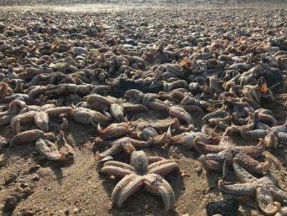 La marea arrastra a miles de animales marinos a la costa de Ramsgate