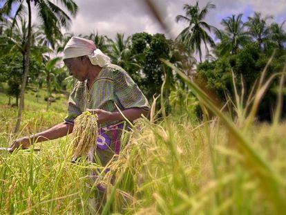 Margaret, protagonista de 'The Letter', durante el tiempo de cosecha en sus tierras en Kaloleni (Kenia).
