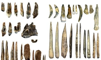 A la izquierda, colgantes hechos de dientes y punzones de huesos tallados por los 'Homo sapiens' de la cueva de Bacho Kiro, en Bulgaria, hace unos 45.000 años. A la derecha, colgantes y punzones tallados por neandertales en Francia unos 3.000 años después.