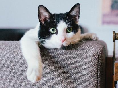Tener gatos como animal de compañía no tiene que ser sinónimo de un mobiliario dañado gracias a estos protectores. GETTY IMAGES