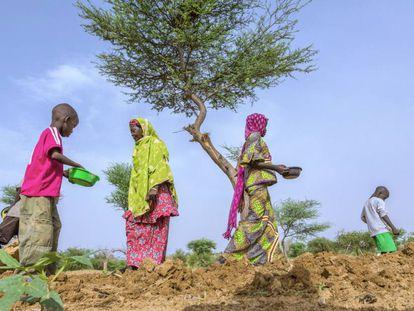 Mehao Saley, de 60 años, y sus hijos y nietos plantan cacahuetes en el terreno familiar en Gafati (Níger).