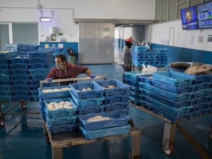 Pescadores protegidos con mascarillas y guantes durante la subasta, donde los vendedores ven reflejado en monitores su producto y el precio, en Cádiz, este martes.