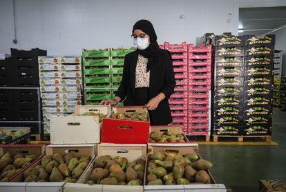 Lamia Azzi, hija de los propietarios marroquíes de la empresa de frutas Azahara, en sus almacenes y dependencias donde dirige el negocio familiar.