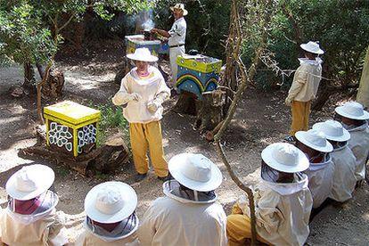 Un grupo de niños vestidos con traje de apicultor admira los panales y las colmenas en la llamada plaza de las abejas.
