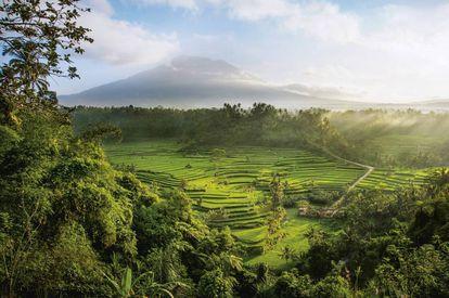 Los bancales de los arrozales de Mahagiri, en Bali, fueron construidos hace más de 2.000 años.