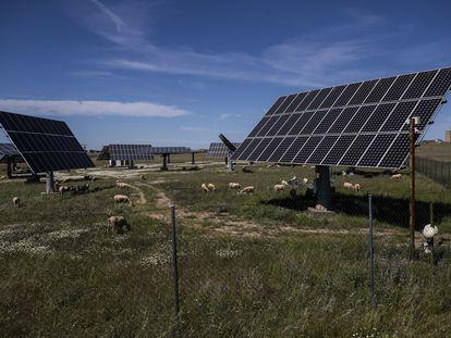 Ganado y paneles solares en una finca de la provincia de Cáceres.