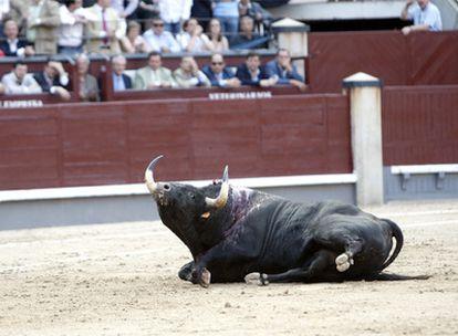 Toro de la ganadería de Adolfo Martín Andrés.