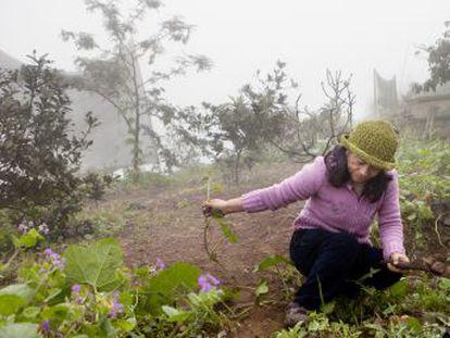 Lima es la segunda ciudad del mundo ubicada en un desierto. Sin lluvia y poco sol, pero sí una espesa niebla, recoger agua con redes es una solución barata