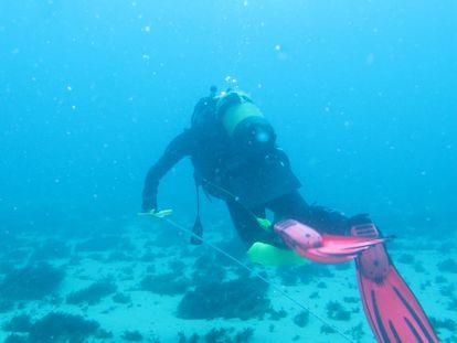 Un investigador de la US, en busca de gorgonias en el fondo marino del entorno de la Isla de Tarifa el pasado marzo.