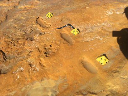Rastro de tres pasos de un adulto neandertal hallado en Matalascañas (Huelva), en la misma superficie que un conjunto de huellas de elefantes de colmillos rectos, algunos neonatos.