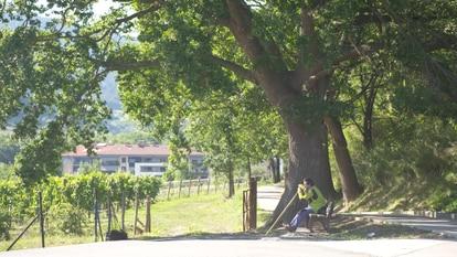 Evaristo, sentado en un banco y con su estaca, descansando de su paseo matutino en los montes alaveses en una imagen del documental.