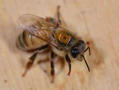 Un nuevo estudio sobre los insecticidas de Bayer y Syngenta ofrece sorprendentes datos por países