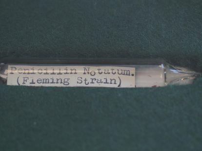 Muestra de la cepa de Penicillium notatum descubierta por Alexander Fleming