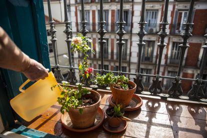 Una mujer riega las plantas de su balcón.