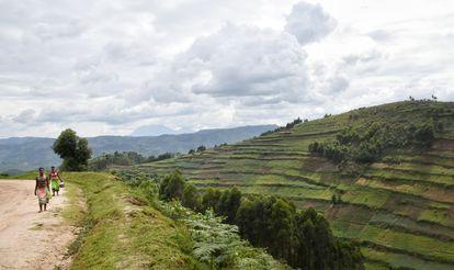 Un grupo de mujeres vuelve de trabajar en una plantación de té de la región de Bwindi. La violencia de género se utiliza a menudo como un férreo control socioeconómico para perpetuar y fomentar unas dinámicas de poder desiguales, entre ellas la propiedad y el acceso a los recursos naturales y su explotación. Pincha en la imagen para ver la fotogalería completa.