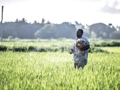 El archipiélago tanzano prueba a fumigar campos con drones para evitar que las millares de larvas se transformen en mosquitos, transmisores de la enfermedad
