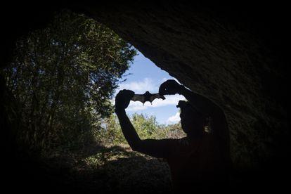 The ecoepidemiologist Jordi Serra-Cobo, in a cave in La Noguera (Lleida), studies the transmission of viruses between bats and humans.