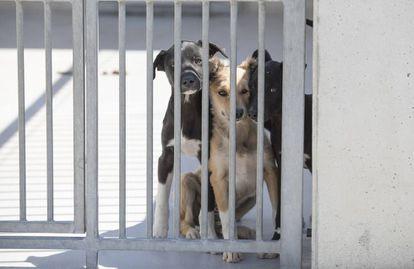 Tres perros en un centro de protección animal en Madrid, en una imagen de archivo.