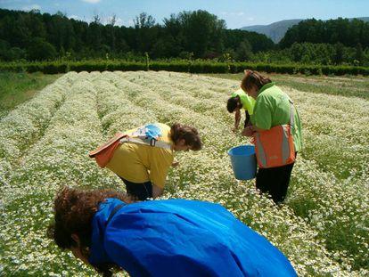 Trabajadores de Josenea en la finca de Lumbier (Navarra).