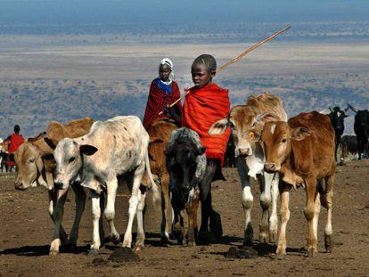 El animal terrestre más grande que quedará será la vaca