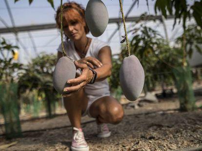 La encargada de la finca El Edén, donde se cultiva mango, aguacate y maracuyá