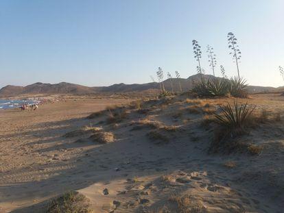 El hotel proyectado está a unos 900 metros en línea recta de la playa de los Genoveses, en el parque natural de Cabo de Gata.