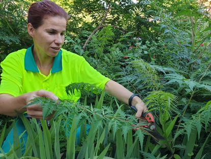 La jardinera Diana Mauri cuidando de las plantas.