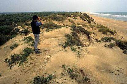 Dunas móviles en la flecha de arena de El Rompido (entre retamas y brezos). En su vertiente atlántica, este paraje natural onubense ofrece playas rectilíneas de arenas finas y restos de conchas marinas.