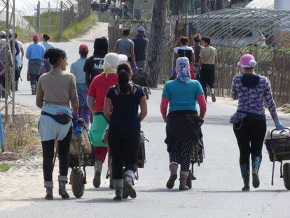 Un grupo de mujeres se dirige al tajo a recoger fresas en una finca de la localidad onubense de Palos de la Frontera.