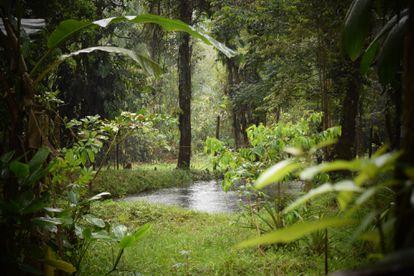 Bosque de Yurumanguí, en el valle del Cauca, Colombia.