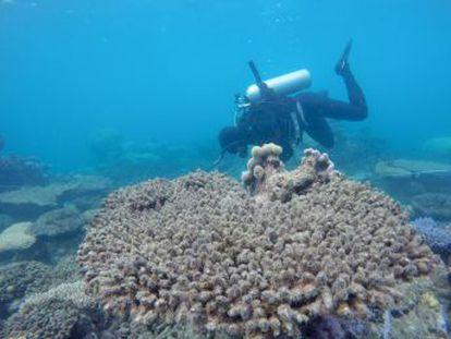 La frecuencia de los eventos de blanqueamiento de los corales se ha multiplicado por cinco en las últimas cuatro décadas, según un estudio publicado en  Science