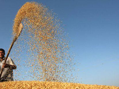 Un agricultor aventa el arroz en Tayikistán.