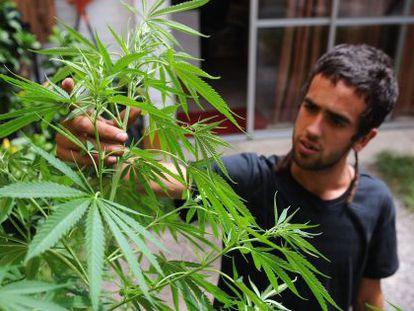 Un hombre trabaja en sus plantas en su casa en Montevideo.