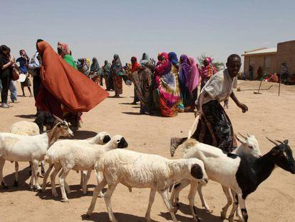 Pastores etíopes conducen al ganado en medio de la sequía.