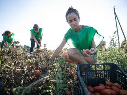 La producción alimentaria, la restauración y los hogares concentran la mayor parte del despilfarro