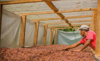 Un agricultor seca cacao en Guatemala.
