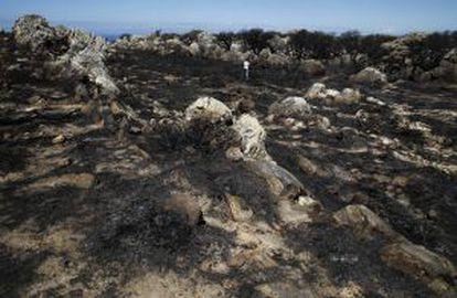 El último incendio en el Retín ha quemado 410 hectáreas.