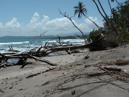 La costa de Cahuita, en el Caribe sur costarricense, ha perdido entre 30 y 50 metros (según el lugar) en las últimas cuatro décadas. La mayoría de ellos, en solo 10 años por culpa del cambio climático.