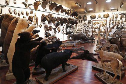 Una sala del pabellón de caza internacional de Marcial Gómez Sequeira.
