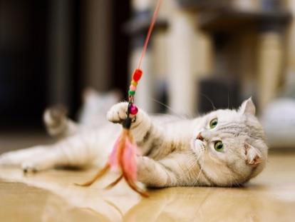 Gracias a estos juguetes se estimula el ejercicio y la diversión de los gatos. GETTY IMAGES.