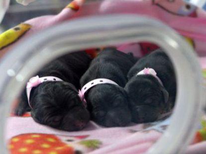 """BoyaLife espera producir 100.000 embriones de vaca de """"calidad superior"""" al año."""