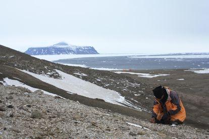 Un paleontólogo en el sitio de la rana en la isla Seymour, en el norte de la Península Antártica.