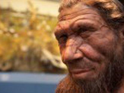 Dos científicos españoles exploran las causas de la desaparición de nuestros parientes más cercanos en el árbol de la evolución