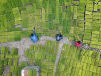 TOPSHOT - This aerial photo taken on April 13, 2021 shows farmers transferring rice seedling at a seedling base in Jianhe in China's southwestern Guizhou province, as a poll of analysts show that the country's economy grew at a record pace during the first quarter in 2021. (Photo by STR / AFP) / China OUT