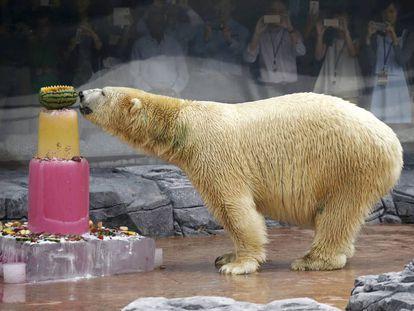 El oso polar Inuka en el zoológico de Singapur el 16 de diciembre de 2015.