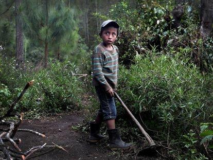 Óscar Tut, de 10 años, trabaja en el huerto de su casa en San Juan Chamelco, Alta Verapaz, Guatemala, a finales de febrero.