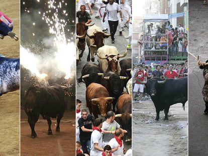 Los festejos taurinos populares incluyen recortes, toros embolados, encierros, sueltas y toros en cuerda.
