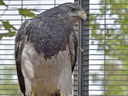Águila escudada en el centro FIEB.