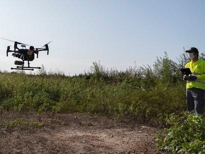 Un técnico vuela un dron para fumigar al mosquito del virus del Nilo en Coria del Río (Sevilla), en septiembre.