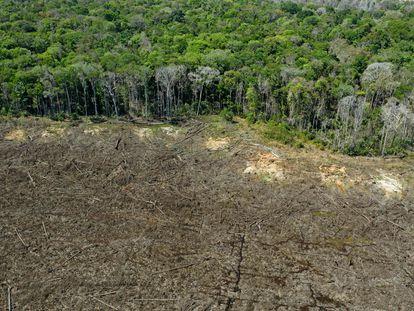 Un área deforestada en una zona cercana a la ciudad de Sinop, en Mato Grosso, el pasado agosto.